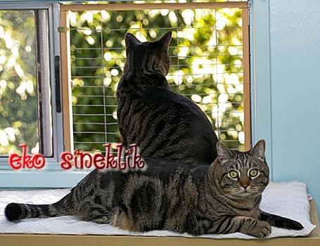 RUMELİHİSARI SİNEKLİK, SİNEKLİKCİ, 05322450078, kedi sineklik, sineklik, sineklikçi,