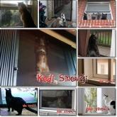TEŞVİKİYE SİNEKLİK, SİNEKLİKCİ, 05322450078, kedi sineklik, sineklik, sineklikçi,