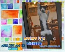 Kedi sinekliği, Sineklik, Her pencereye Uygun, Sineklik çeşitleri, Mavi Sineklik, 0532 245 00 78